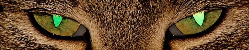 Schädlingsbekämpfung PetRa -